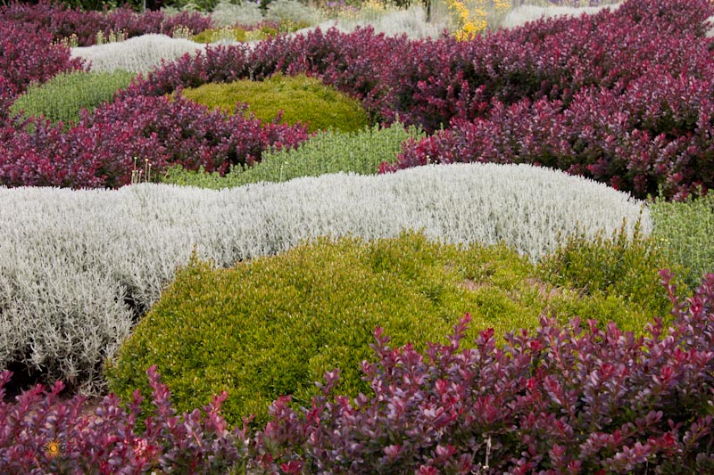 "Waves of ornamental plants create a ""painted"" landscape."